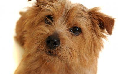 Hunden som aldri ble terapihund