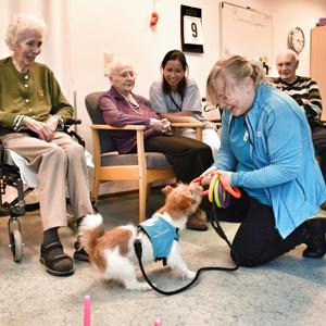 firbent terapi hva kreves av en terapihund