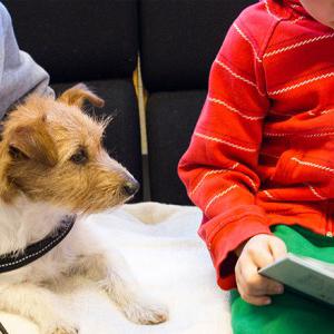 Firbent terapi skolehund