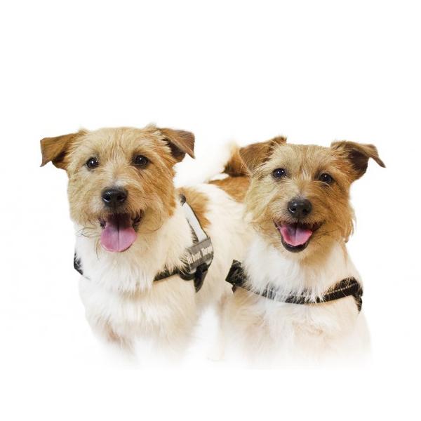 Terapihunder som hjelp mot stress- men hva med hundene?