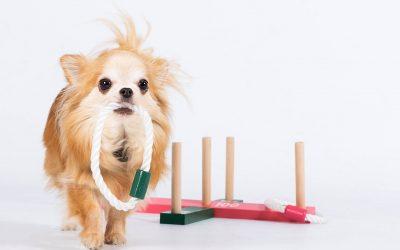 Terapihund- mer enn bare kos