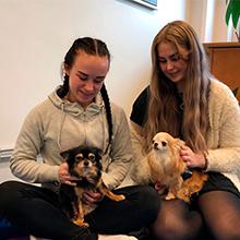 Hunder skal dempestress og eksamensnerver